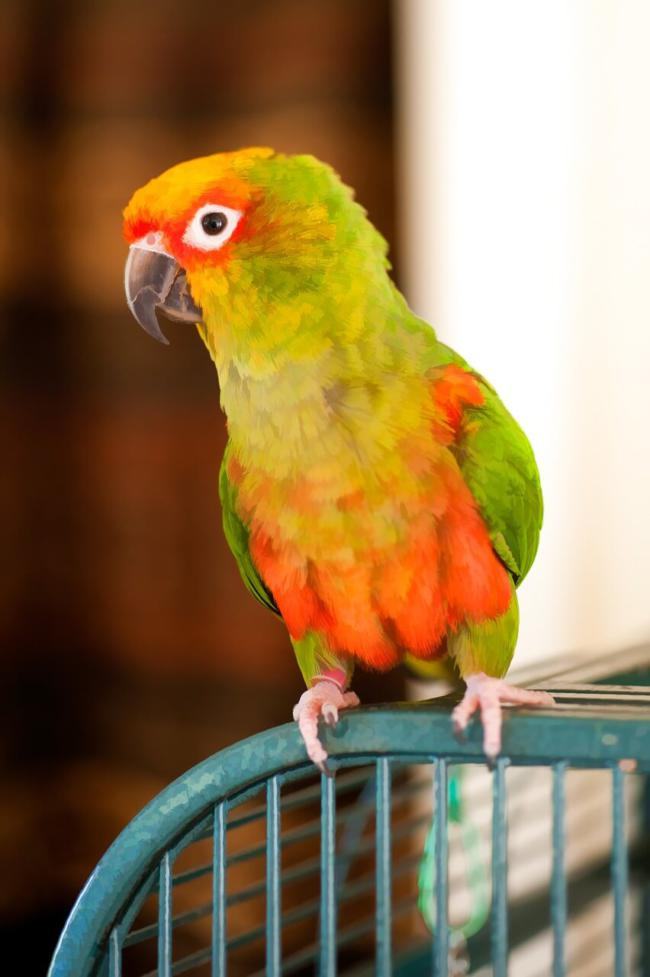 what toys do conures like?