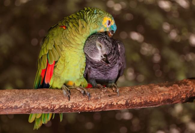 Should parrots be kept in flocks?