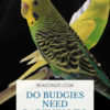 Do Budgies need darkness to sleep?