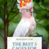 best bird cages for cockatoos