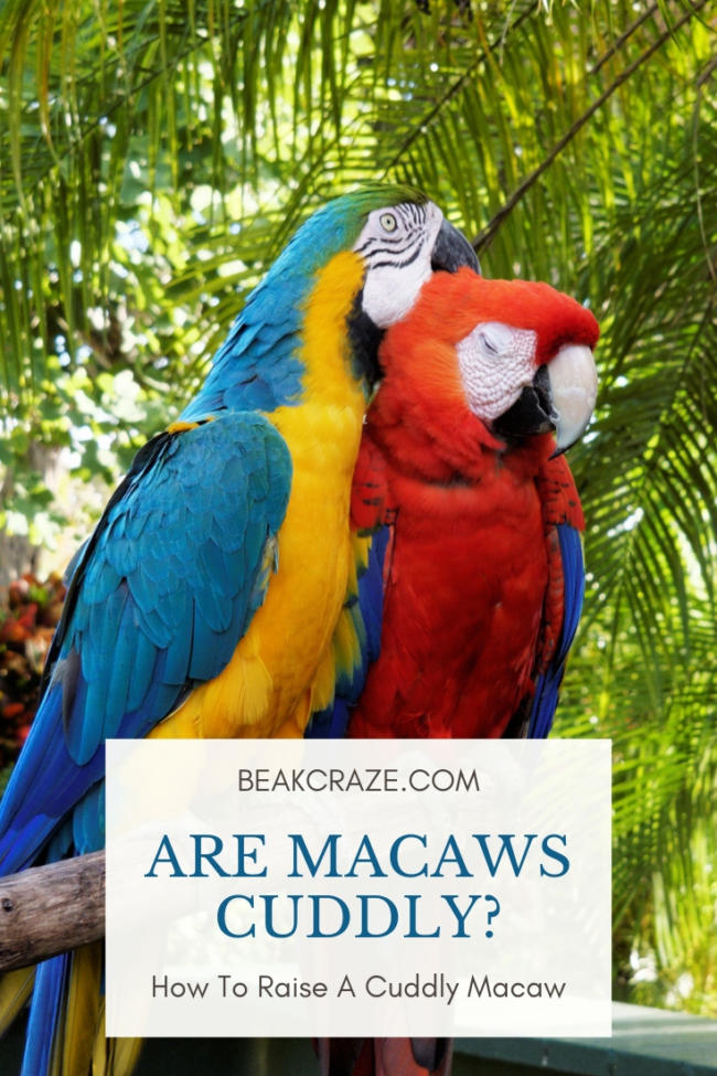 Are macaws cuddly?