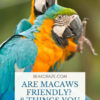 Are macaws friendly?