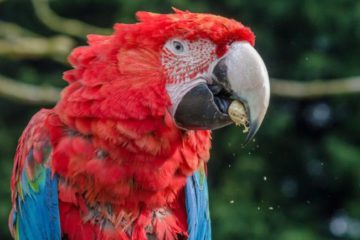 are macaws messy?