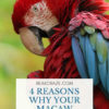 do macaws smell bad?