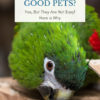 Are mini macaws good pets?