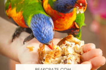 can parrots eat bread?