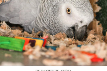 Can parrots play with cardboard?
