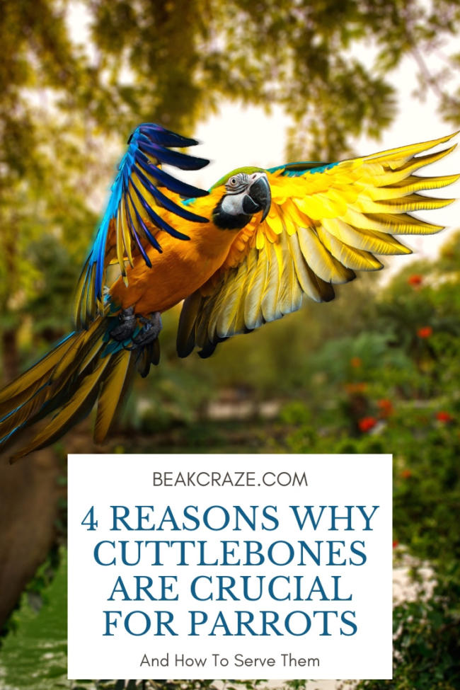 do parrots need cuttlebones?