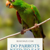 do parrots need grit?