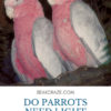 Do parrots need light at night?