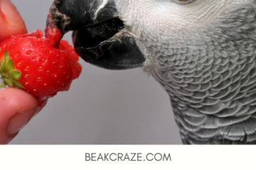 Can parrots eat strawberries?