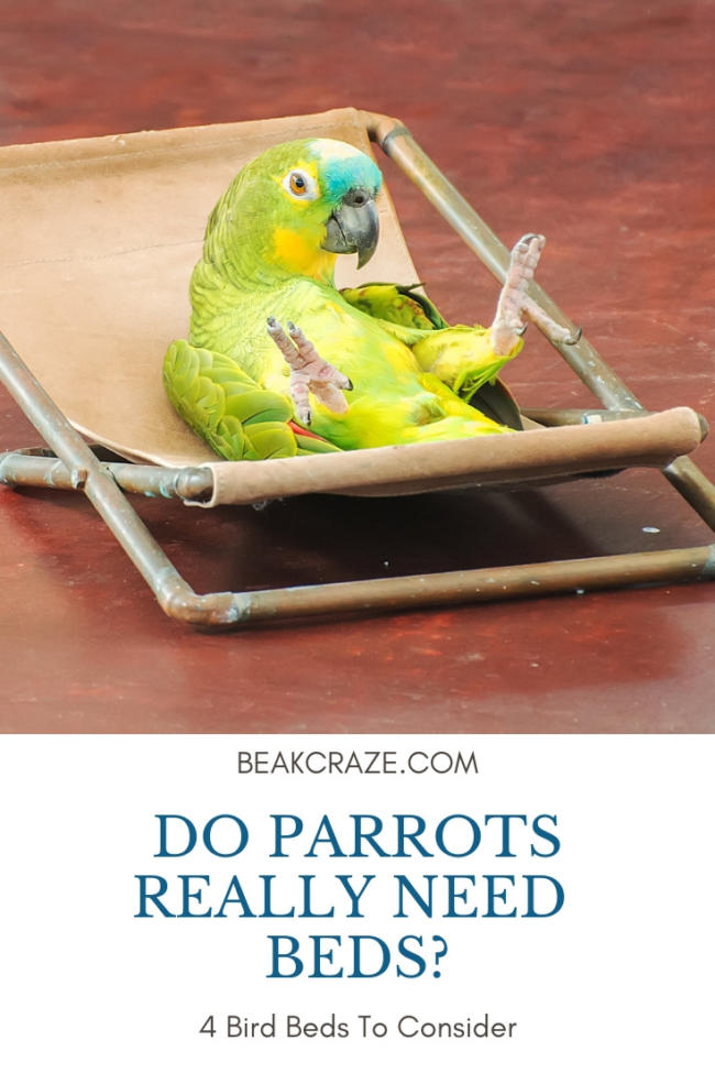do parrots need beds?