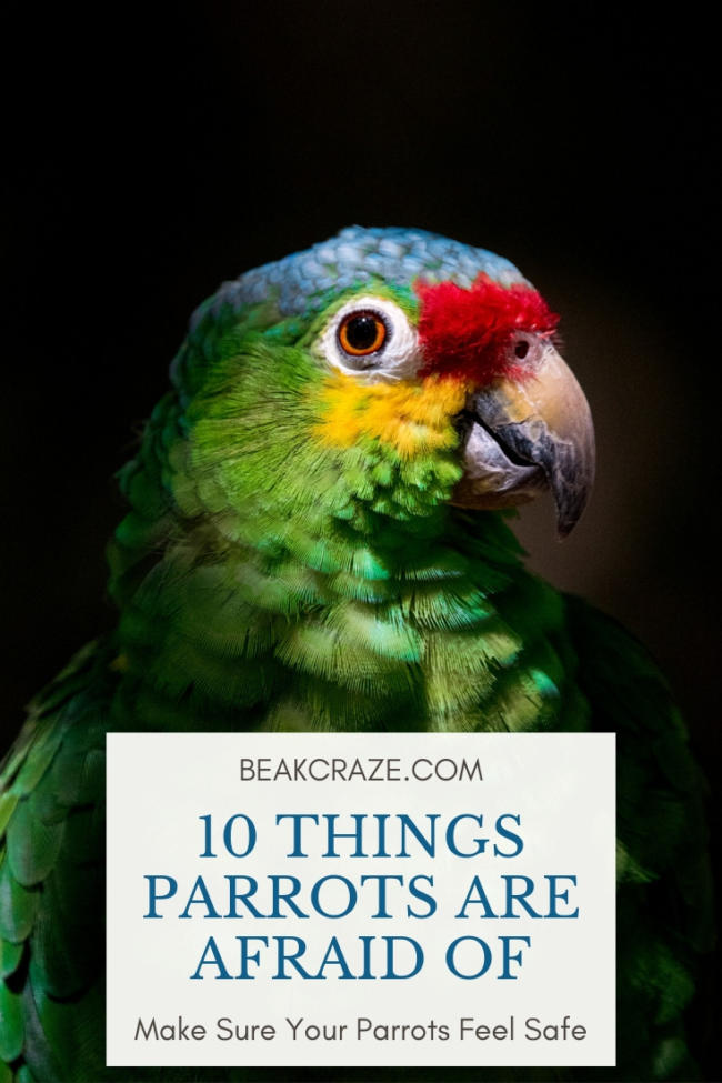 What are parrots scared of?