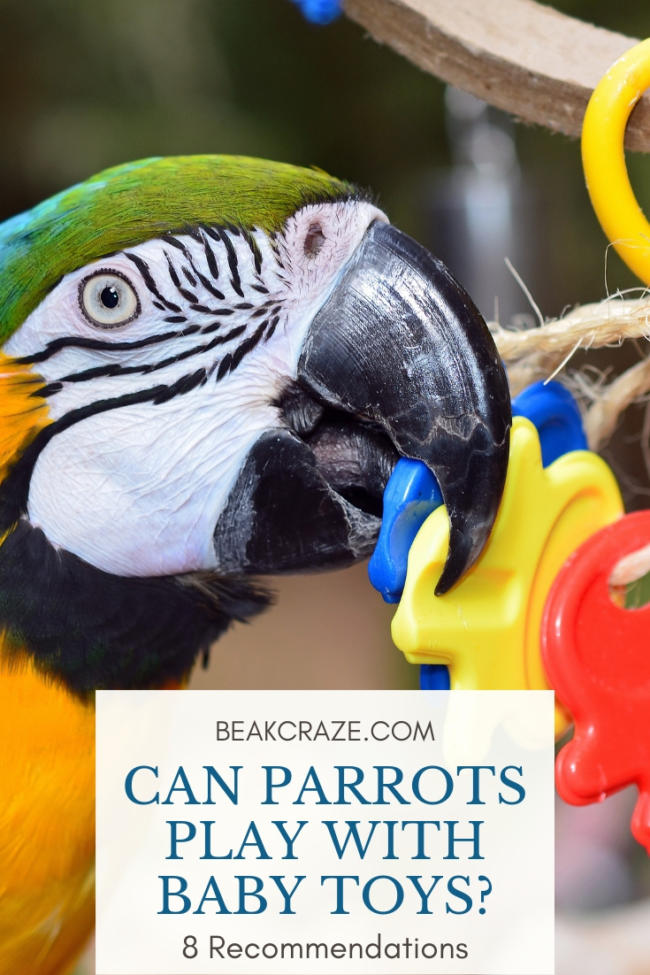 Can parrots play with baby toys?