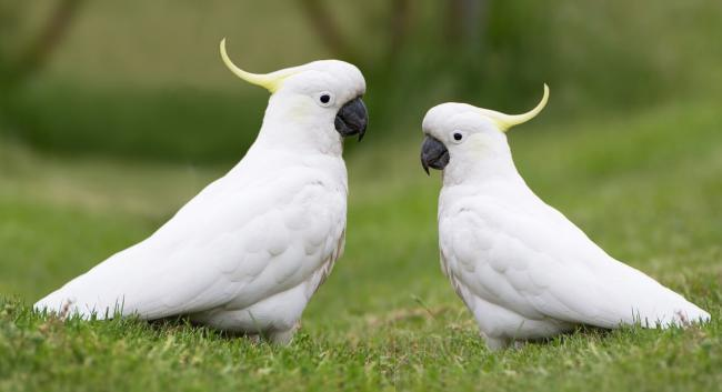 what is the best birdcage for cockatoos?