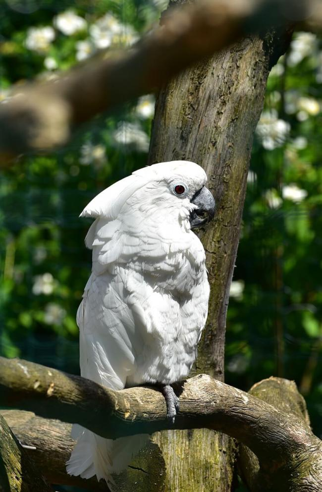 What type of birdcage is good for cockatoos?