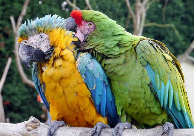 do macaws make a lot of mess?