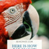 how bad are macaw bites?