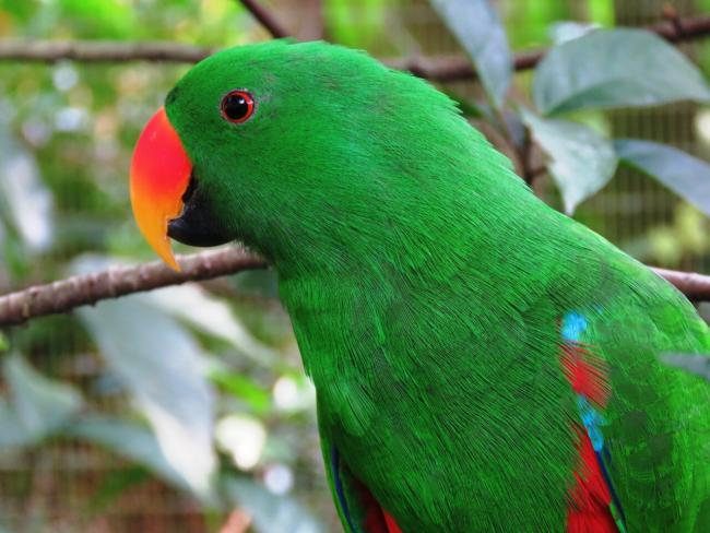 What can parrots remember?