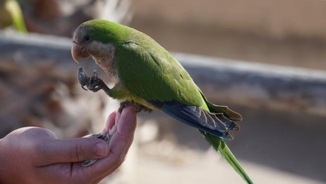 is bread healthy for parrots?