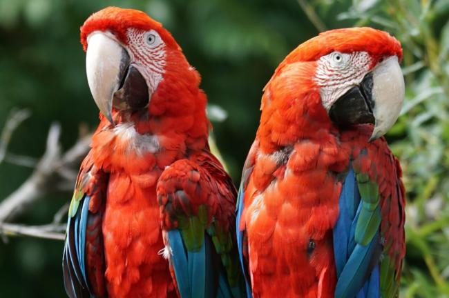 do macaw bites hurt?